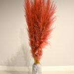 Trawa pampasowa suszona czerwona 2