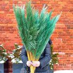 Trawa pampasowa suszona zielona 1