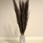 Trawa pampasowa suszona czarna 1