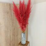 Trawa pampasowa suszona czerwona 1