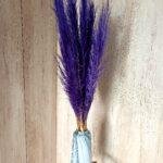 Trawa pampasowa fioletowa 2
