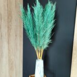 Trawa pampasowa suszona zielona