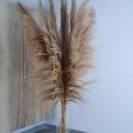 Trawa pampasowa brązowa boho 2
